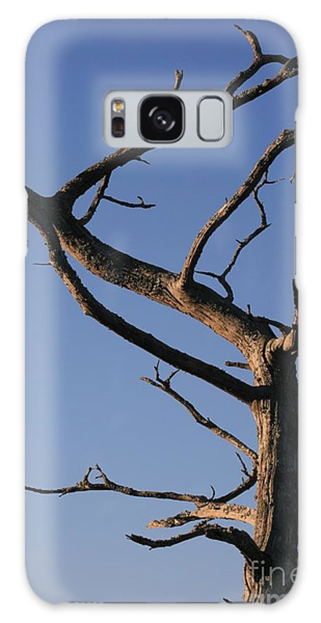 Tree Galaxy S8 Case featuring the photograph Gnarly Tree by Nadine Rippelmeyer