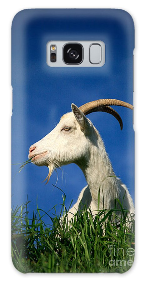 Animals Galaxy S8 Case featuring the photograph Goat by Gaspar Avila