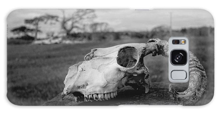 Skull Galaxy S8 Case featuring the photograph Goat Skull by Ulisse Bart