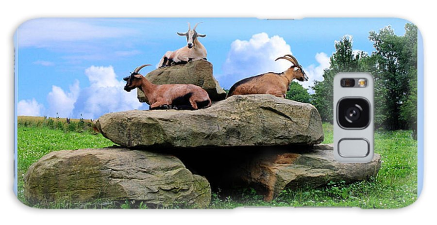 Goat Animal Rock Nature Sky Pet Three Galaxy S8 Case featuring the photograph Goats On The Rock by Judy Baird