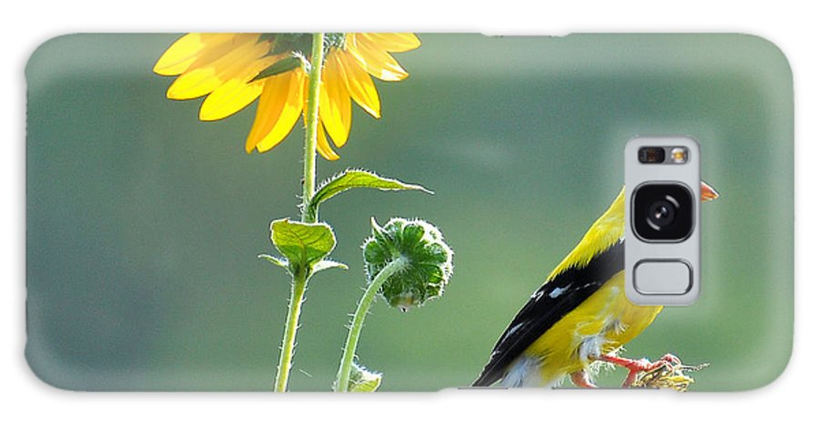 Gold Finch Galaxy S8 Case featuring the photograph Gold Finch by Todd Hostetter