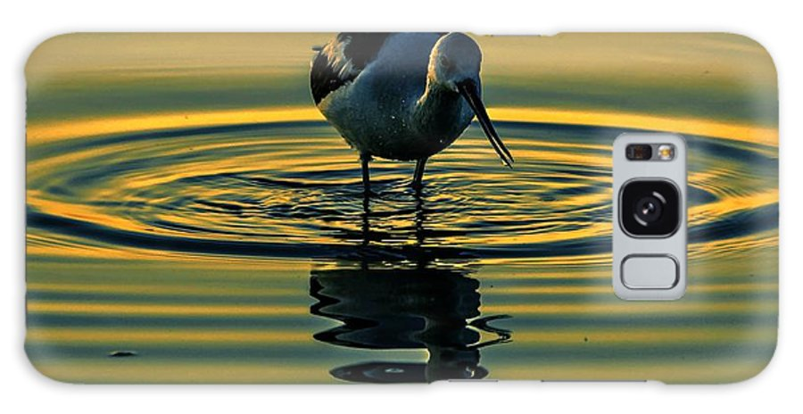 Bird Galaxy S8 Case featuring the photograph Gold Pond Avocet by John R Williams