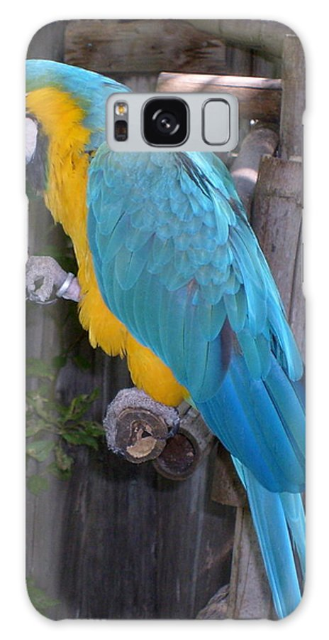 Macaw Galaxy Case featuring the photograph Golden Blue Macaw by Melissa Parks