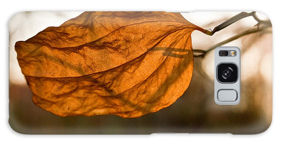 Golden Galaxy S8 Case featuring the photograph Golden Briar Leaf by Douglas Barnett
