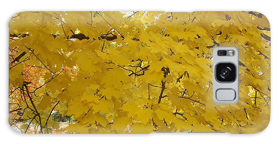 Fall Autum Trees Maple Yellow Galaxy Case featuring the photograph Golden Canopy by Karin Dawn Kelshall- Best