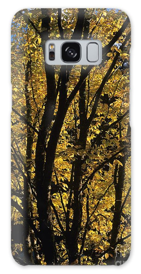Autumn Galaxy S8 Case featuring the photograph Golden Colors Of Autumn In New England by Erin Paul Donovan