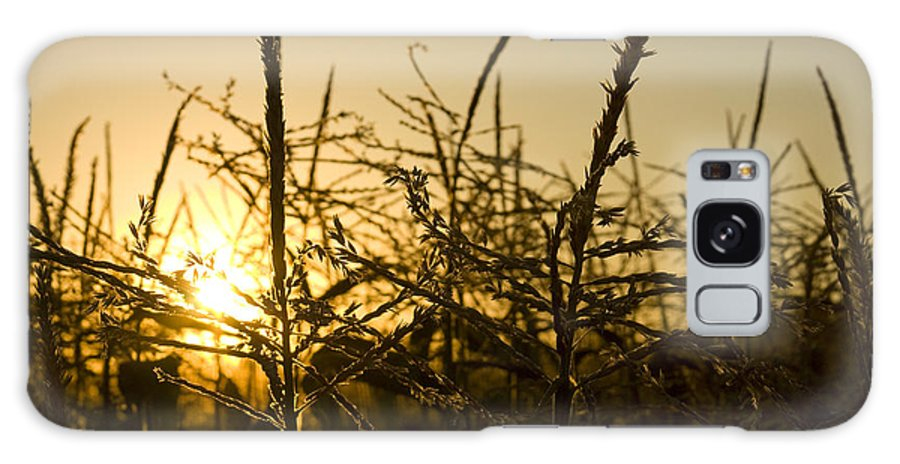 Golden Galaxy Case featuring the photograph Golden Corn by Idaho Scenic Images Linda Lantzy