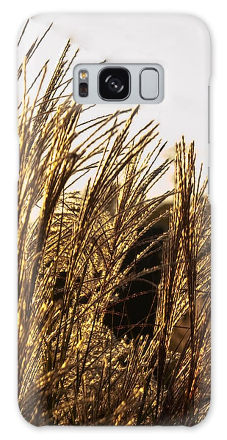Golden Galaxy S8 Case featuring the photograph Golden Grass Flowers by Douglas Barnett