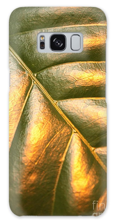 Gold Galaxy S8 Case featuring the photograph Golden Leaf by Carol Groenen