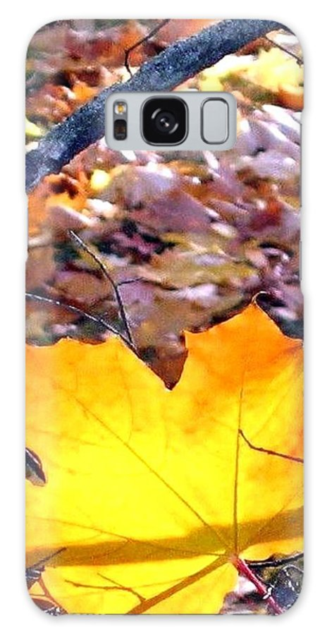 Maple Leaf Galaxy S8 Case featuring the photograph Golden Leaf by Will Borden