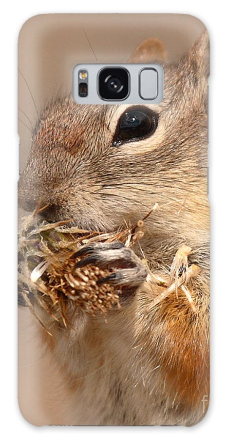 Golden-mantled Ground Squirrel Galaxy S8 Case featuring the photograph Golden-mantled Ground Squirrel Nibbling On A Bite by Max Allen