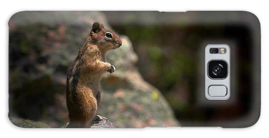 Nature Galaxy Case featuring the photograph Golden Mantled Ground Squirrel Rocky Mountains Colorado by Christine Till