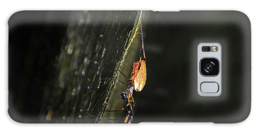 Golden Orb Spider Galaxy S8 Case featuring the photograph Golden Orb Spider by David Lee Thompson