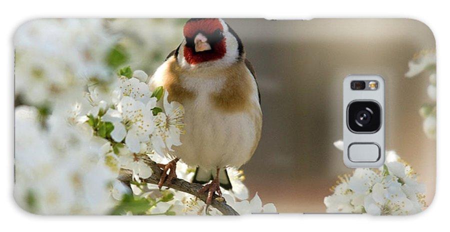 Goldfinch Spring Blossom Galaxy S8 Case featuring the photograph Goldfinch Spring Blossom by Cliff Norton