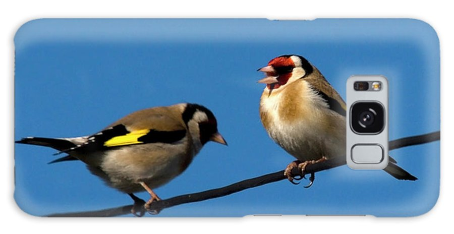 Goldfinch Spring Blossom Galaxy S8 Case featuring the photograph Goldfinch Spring by Cliff Norton