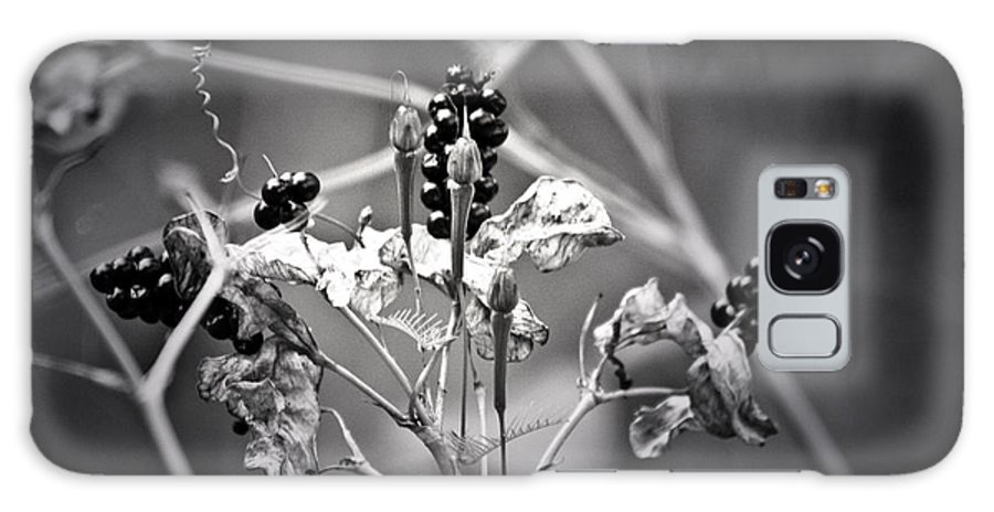 Flower Galaxy S8 Case featuring the photograph Gone To Seed Berries And Vines by Teresa Mucha