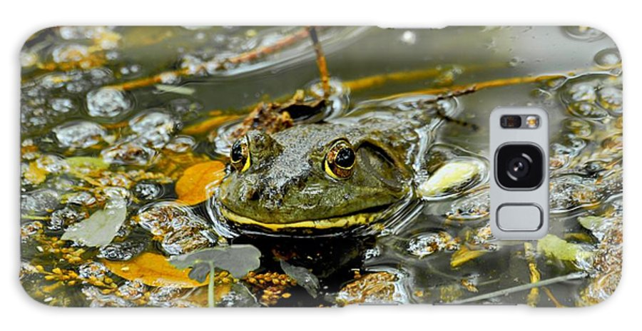 Frogs Galaxy S8 Case featuring the photograph Good Morning by Donna Shahan