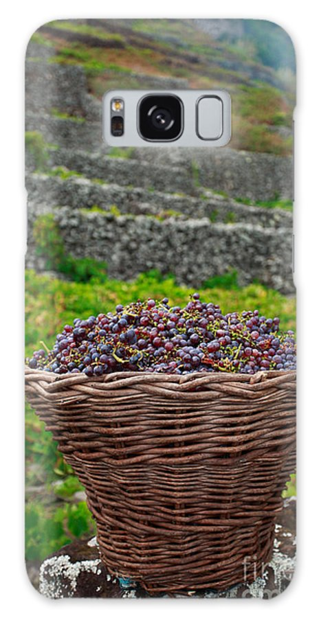 Basket Galaxy S8 Case featuring the photograph Grape Harvest by Gaspar Avila