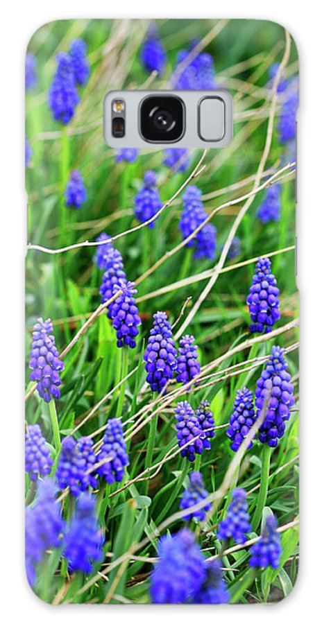 Grape Galaxy S8 Case featuring the photograph Grape Hyacinth by Marilyn Hunt