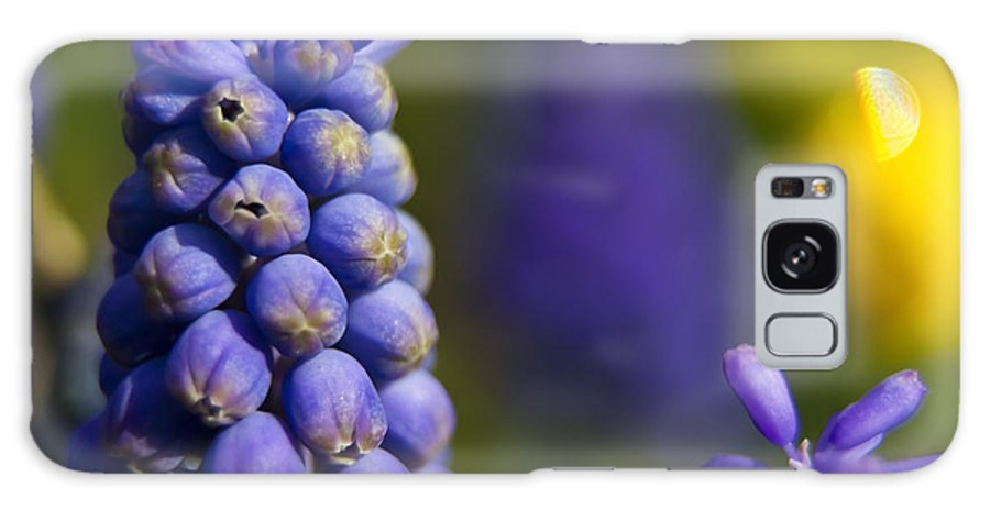 Purple Flowers Galaxy S8 Case featuring the photograph Grape Hyacinth by Sven Brogren