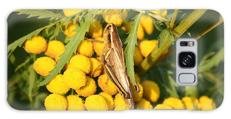 Bug Grasshopper Plants Flowers Nature Yellow Wild Life Green Weed Galaxy S8 Case featuring the photograph Grasshopper by Andrea Lawrence
