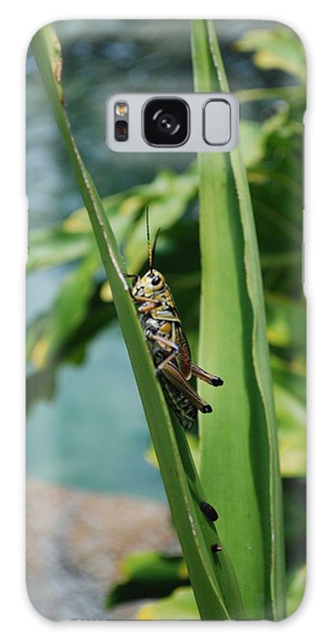 Field Galaxy Case featuring the photograph Grasshopper by Margaret Fortunato