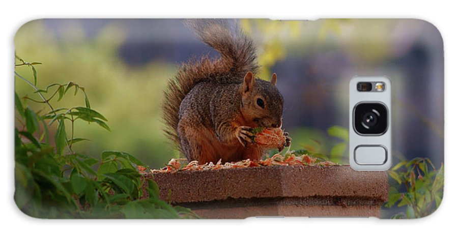Rmb2010072600031 Galaxy S8 Case featuring the photograph Munching Squirrel by Robert Braley