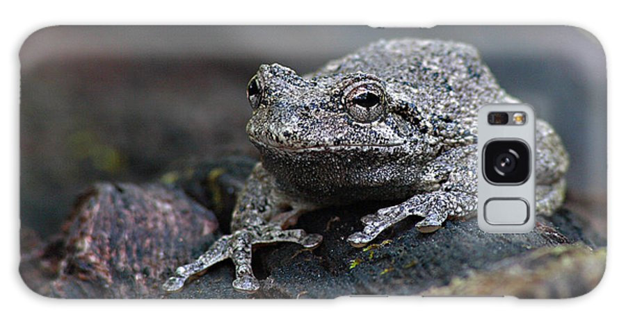 Frog Galaxy Case featuring the photograph Gray Treefrog On A Log by Max Allen