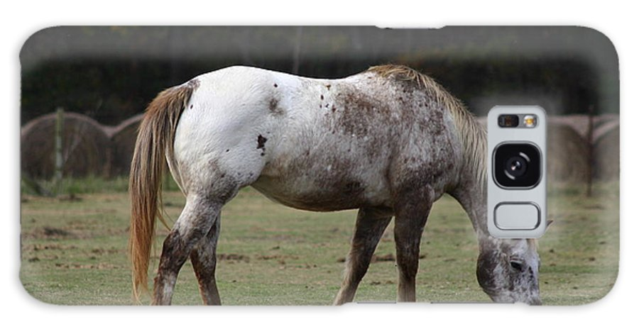 Horse Galaxy S8 Case featuring the photograph Grazing Time by Kim Henderson