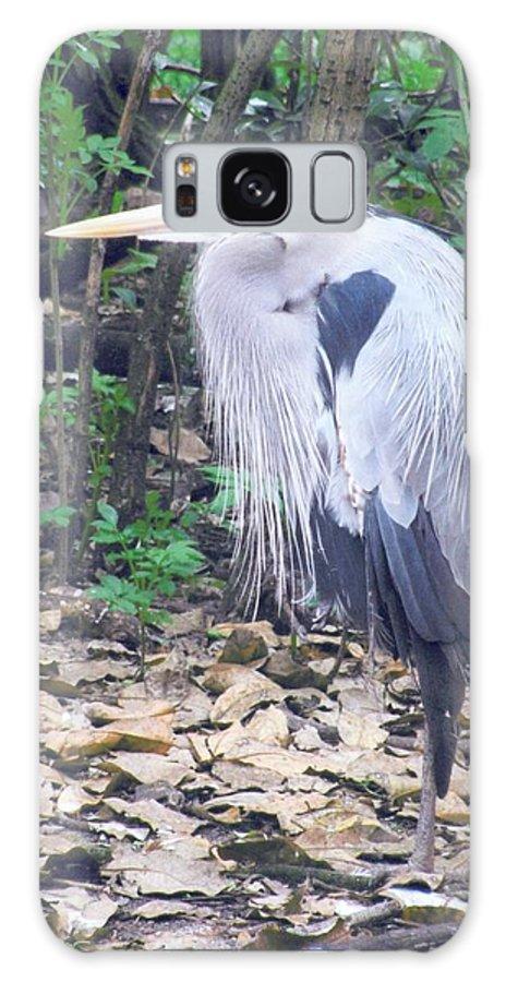 Bird Galaxy S8 Case featuring the photograph Great Blue Heron by Deena Greenberg
