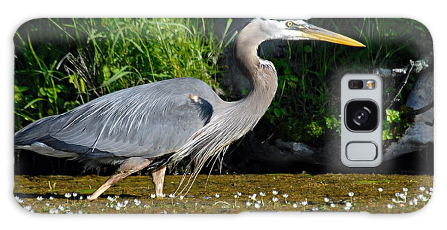Great Blue Heron Galaxy S8 Case featuring the photograph Great Blue Heron by Larry Ricker