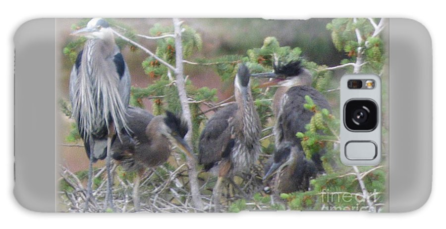 Great Blue Heron Galaxy S8 Case featuring the photograph Great Blue Heron Nest by Charles Robinson