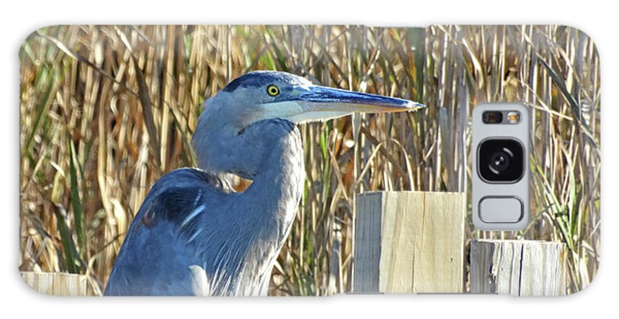 Great Blue Heron Galaxy S8 Case featuring the photograph Great Blue Heron On Guard by Pat Miller