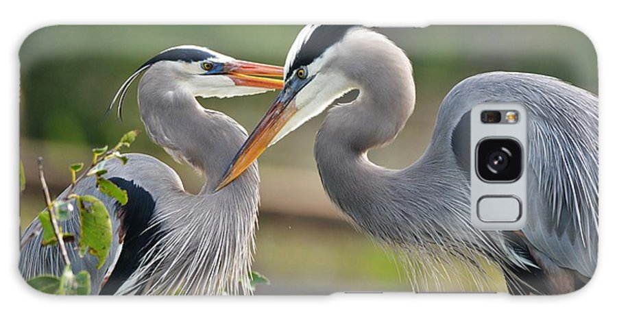 Great Blue Herons Galaxy S8 Case featuring the photograph Great Blue Heron Pair 3 by Julie Adair