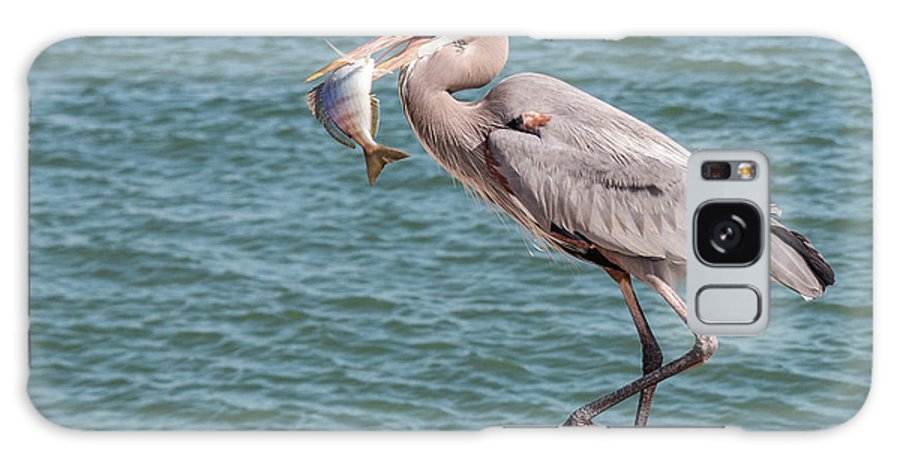 Bird Galaxy S8 Case featuring the photograph Great Blue Heron Walking With Fish #3 by Patti Deters