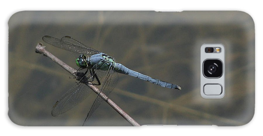 Dragonfly Galaxy S8 Case featuring the photograph Great Blue Skimmer Dragonfly by Donna Brown