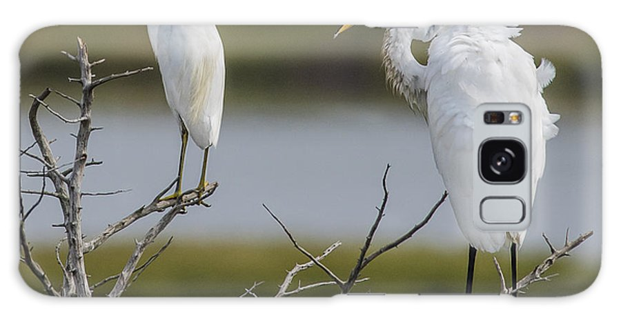 Great Egret And Snowy Egret Perched Galaxy S8 Case featuring the photograph Great Egret And Snowy Egret Perched by Morris Finkelstein
