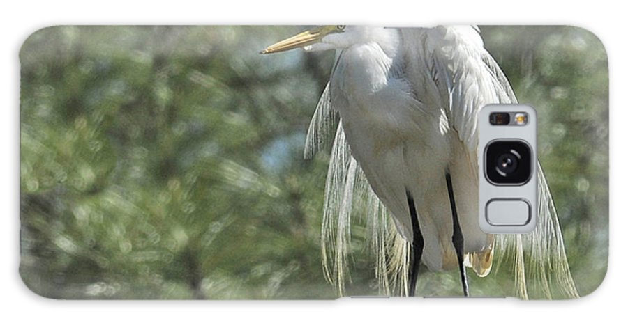 Great Egret Galaxy S8 Case featuring the photograph Great Egret II by Keith Lovejoy