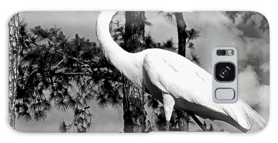 Animals Galaxy S8 Case featuring the photograph Great Heron by Dale Chapel