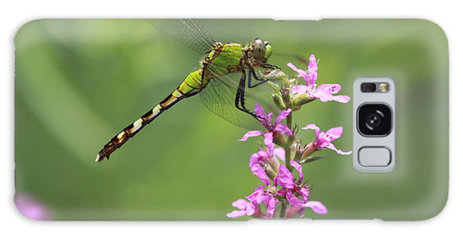 Dragonfly Galaxy S8 Case featuring the photograph Green And Pink by Paul Slebodnick