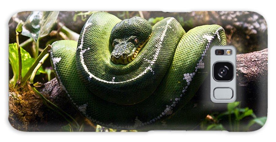 Green Galaxy S8 Case featuring the photograph Green Boa by Douglas Barnett
