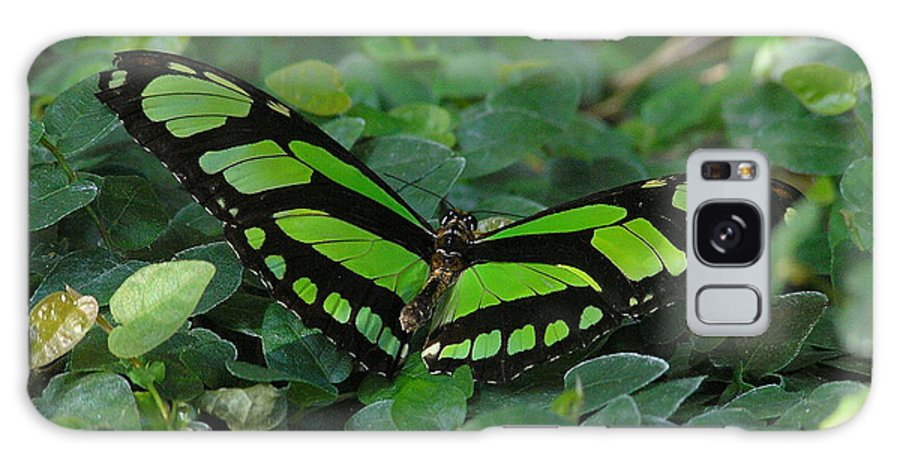 Green Galaxy Case featuring the photograph Green Butterfly by Louise Magno