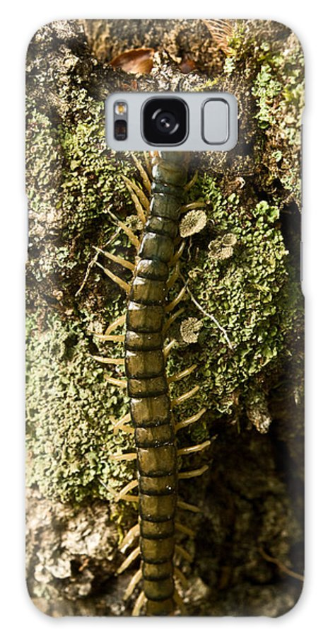 Centipede Galaxy S8 Case featuring the photograph Green Centipede by Douglas Barnett