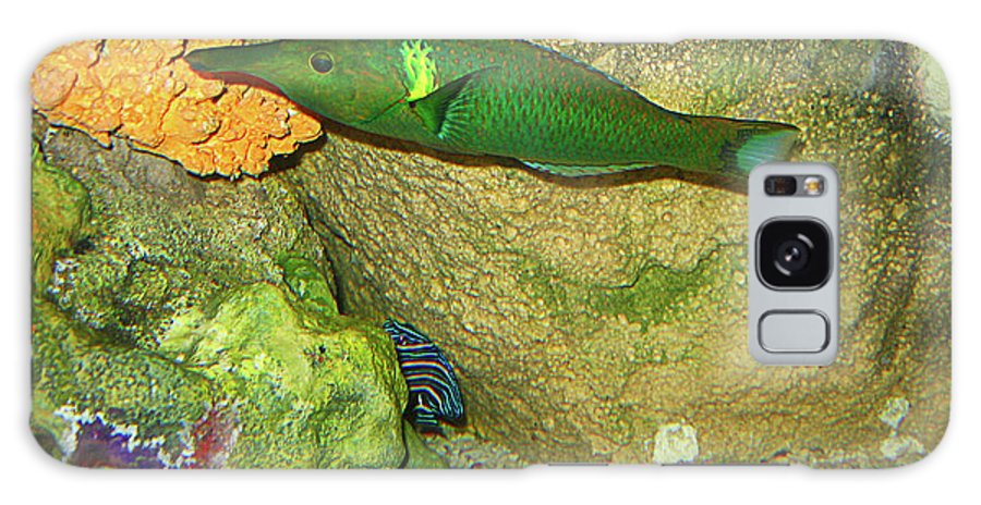 Fish Galaxy S8 Case featuring the photograph Green Fish by Denise Keegan Frawley