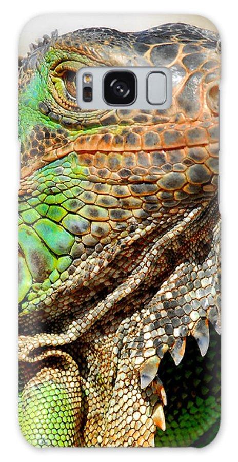 Iguana Galaxy S8 Case featuring the photograph Green Iguana Series by Craig Incardone