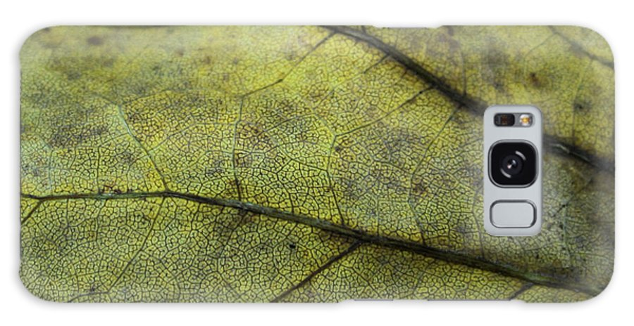 Nature Galaxy Case featuring the photograph Green Leaf by Linda Sannuti