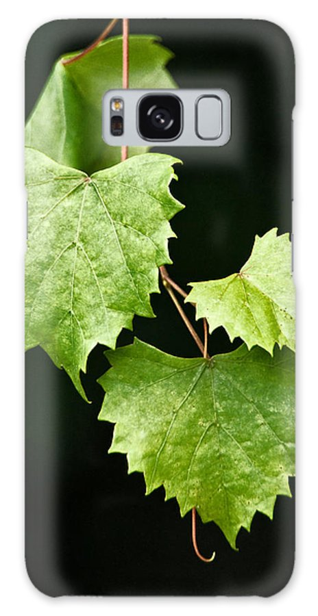 Flora Galaxy S8 Case featuring the photograph Green Leaves by Christopher Holmes