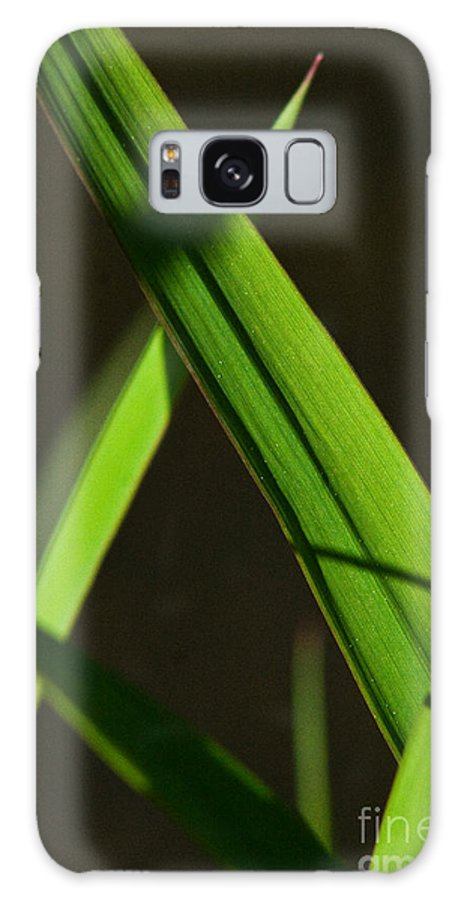 Green Galaxy S8 Case featuring the photograph Green Leaves In Sunlight by Martha Johnson