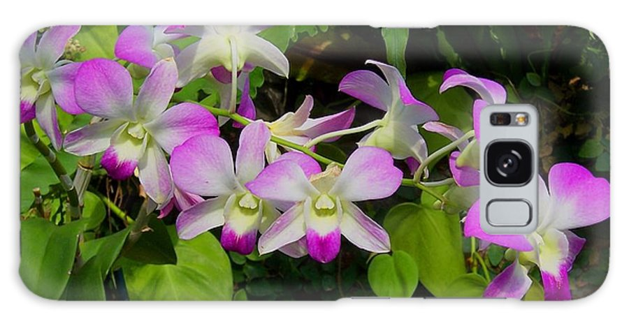 Orchid Galaxy S8 Case featuring the photograph Green Leaves With Orchids by Laurie Paci
