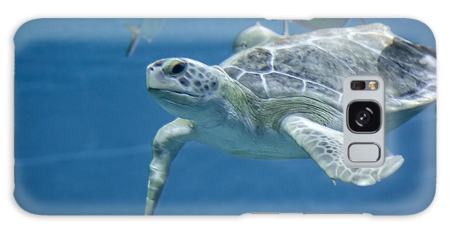 Turtle Galaxy S8 Case featuring the photograph Green Sea Turtle by Michael Shake